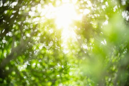 Blurred out of focus of green nature leaf and tree under sunlight with bokeh using as background natural plants landscape, ecology wallpaper concept. Banco de Imagens
