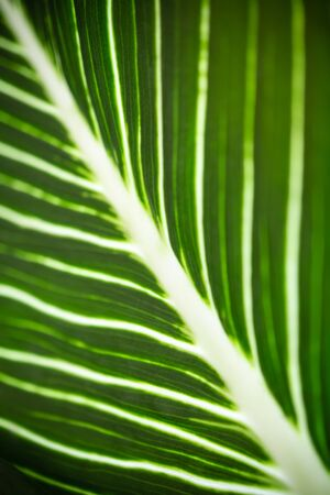Close up of nature view green leaf texture and pattern using as background natural plants landscape, ecology wallpaper concept.
