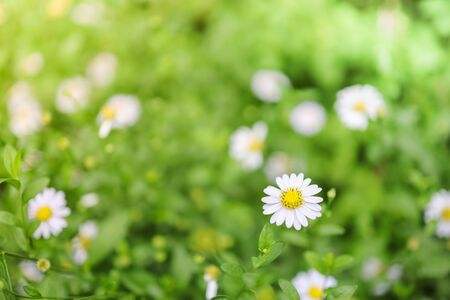 Close up of beautiful mini white flower with green leaf under sunlight using as background natural plants landscape, ecology wallpaper concept.