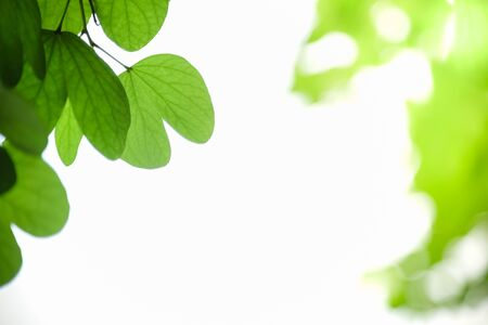Close up of nature view green leaf on blurred greenery background under sunlight with bokeh and copy space using as background natural plants landscape, ecology wallpaper concept. Banco de Imagens