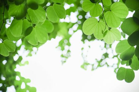 Close up of nature view young green leaf on blurred greenery background under sunlight with bokeh and copy space using as background natural plants landscape, ecology wallpaper concept.