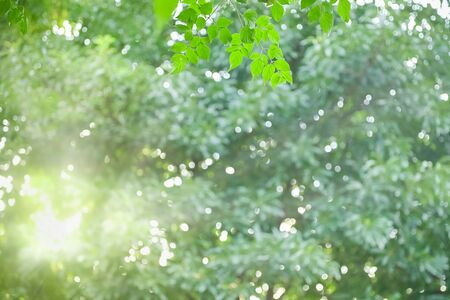 Close up of nature view green cork tree leaf on blurred greenery background under sunlight with bokeh and copy space using as background natural plants landscape, ecology wallpaper concept.