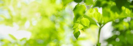 Nahaufnahme des grünen Blattes der Naturansicht auf verschwommenem grünem Hintergrund unter Sonnenlicht mit Bokeh und Kopienraum unter Verwendung der natürlichen Pflanzenlandschaft als Hintergrund, Ökologie-Abdeckungskonzept.