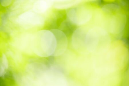 Abstract blurred out of focus and blurred green leaf background under sunlight with bokeh and copy space using as background natural plants landscape, ecology wallpaper concept.