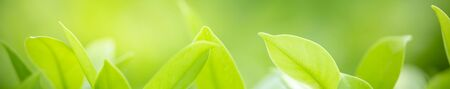 Close up of nature view green leaf on blurred greenery background under sunlight with bokeh and copy space using as background natural plants landscape, ecology cover concept. Stock Photo