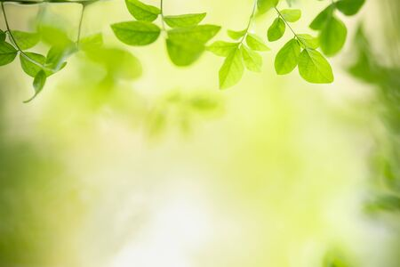 Close up of nature view green leaf on blurred greenery background under sunlight with bokeh and copy space using as background natural plants landscape, ecology wallpaper concept. Stockfoto