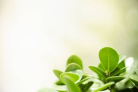 Close up of nature view green leaf on blurred greenery background under sunlight with bokeh and copy space using as background natural plants landscape, ecology wallpaper concept. Stock Photo