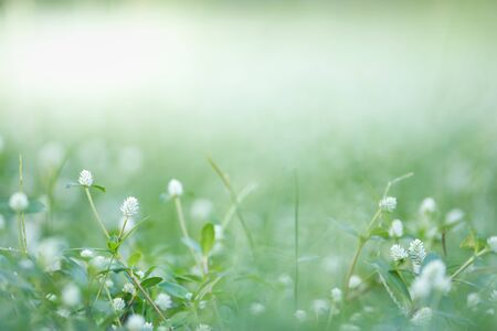 Close up of nature view mini white flower and grass on blurred green leaf background under sunlight with bokeh and copy space using as background natural plants landscape, ecology wallpaper concept. Stock Photo