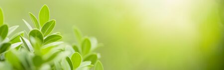 Close up beautiful nature view green leaf on blurred greenery background under sunlight with bokeh and copy space using as background natural plants landscape, ecology cover page concept.