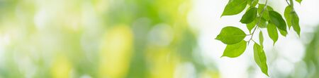 Close up beautiful nature view green leaf on blurred greenery background under sunlight with bokeh and copy space using as background natural plants landscape, ecology cover concept. Zdjęcie Seryjne