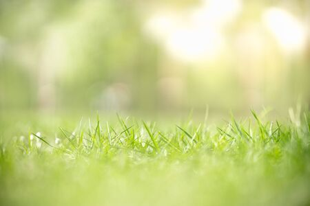 Close up of nature view green grass leaf on blurred greenery background under sunlight with bokeh and copy space using as background natural plants landscape, ecology wallpaper concept.