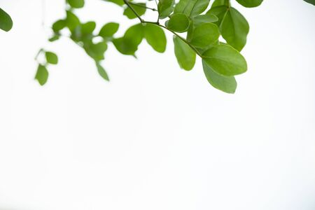 Close up of beautiful nature view green leaf on white sky and blurred greenery background under sunlight with bokeh and copy space using as background natural plants landscape, ecology wallpaper concept. Zdjęcie Seryjne