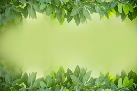 Close up of beautiful nature view green leaf on blurred greenery background under sunlight with bokeh and copy space using as background natural plants landscape, ecology wallpaper for text concept.