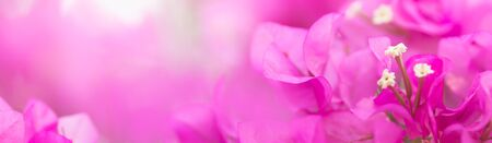 Close up nature beautiful view pink Bougainvillea on blurred greenery background under sunlight with bokeh and copy space using as background natural plants landscape, ecology cover page concept.