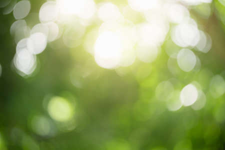 Abstract blurred out of focus and blurred green leaf nature background under sunlight with bokeh and copy space using as background natural plants landscape, ecology wallpaper concept. Archivio Fotografico