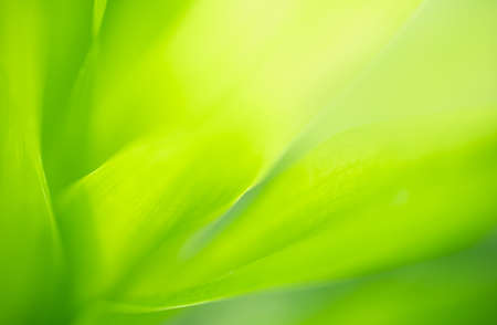 Abstract blurred out of focus and blurred green leaf nature background under sunlight with bokeh and copy space using as background natural plants landscape, ecology wallpaper concept. 写真素材