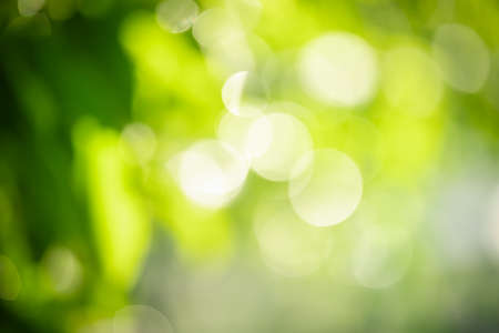 Abstract blurred out of focus and blurred green and yellow leaf nature background under sunlight with bokeh and copy space using as background natural plants landscape, ecology wallpaper concept.