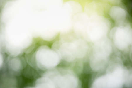 Abstract blurred out focus of green nature leaf with bokeh under sunlight. Use for wallaper or background.
