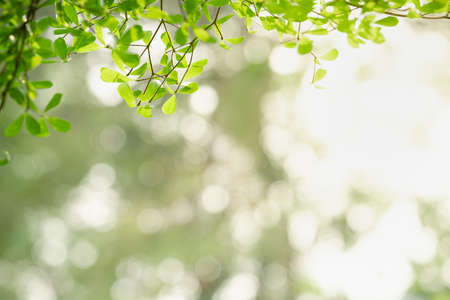 Beautiful nature view green leaf on blurred greenery background under sunlight with bokeh and copy space using as background natural plants landscape, ecology wallpaper concept.