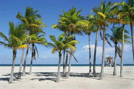 clave sol: Una tarde soleada, con cielo azul profundo y brillante arena blanca en una playa de Miami