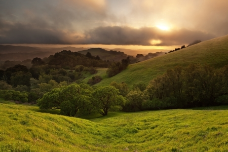 vista: A beautiful sunset over a typical hilly California oak grassland in spring on foggy day