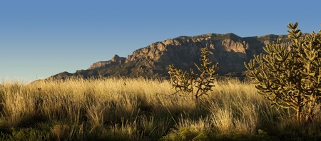 Evening light bathes Albuquerques Sandia Mountains and desert flora in golden light