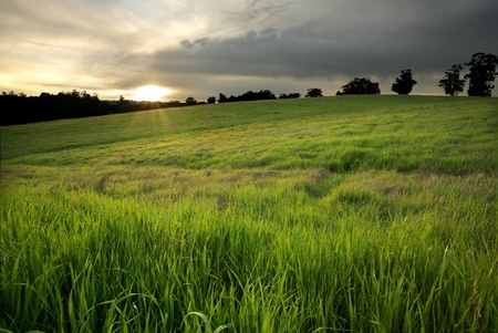 Lush green pasture at sunset in Central California