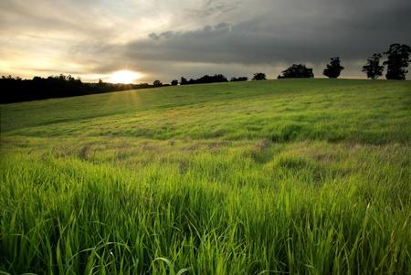 arri�re-pays: Lush vert p�turage au coucher du soleil dans le centre de la Californie Banque d'images