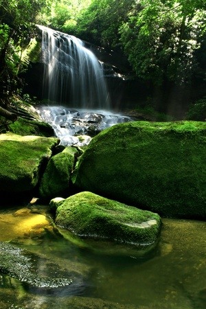 waterfall in forest: A hidden waterfall in a dense rain forest, with mist being lit up by sunlight and mossy rocks in the foreground