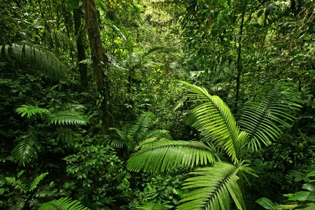 A picture looking into a dense, lush, remote tropical rain forest jungle in Costa Rica