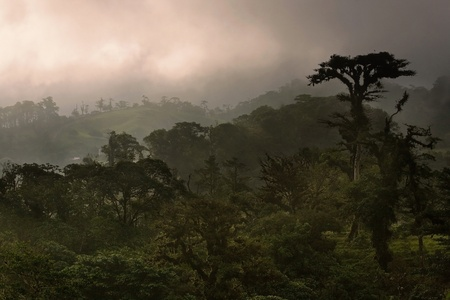 Dense Costa Rica tropical cloud forest im mist at sunset photo