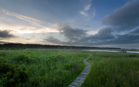 Boardwalk in a marsh or swamp in the outer banks of North Carolina at sunset.