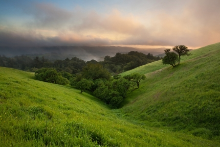 A beautiful sunset over a typical hilly California oak grassland in spring on foggy day