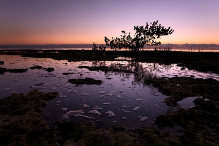 Silhouetted Mangrove Tree in South Florida Sunrise Stock Photo - 11799218