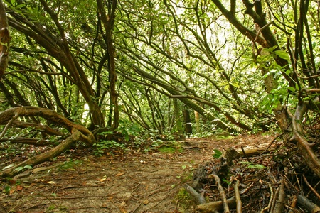 the thicket: Ominous dense rain forest thicket Stock Photo