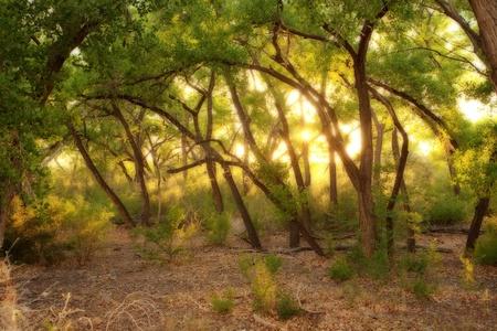 Beautiful shady oak forest at dusk photo