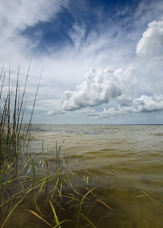 Coastal reeds and sea with afternoon storm clouds building