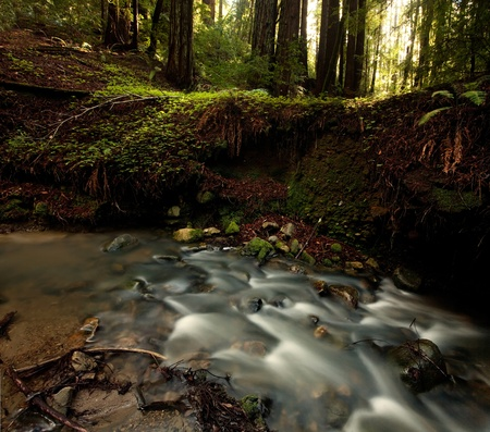 Lush Rain Forest Stream with rays of sunlight photo