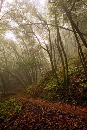A hiking path through a spooky, foggy forest photo