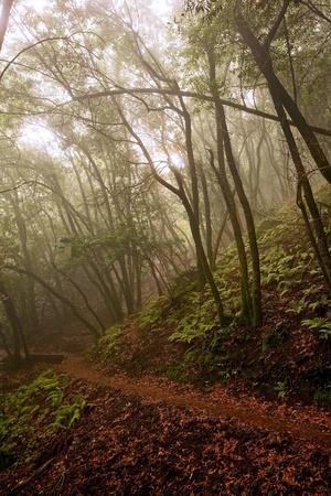 A hiking path through a spooky, foggy forest