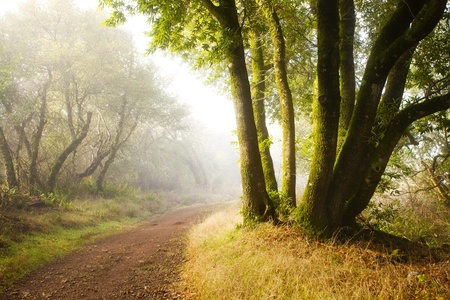 magical forest: Magical Hiking Trail at Dawn, on typical California chaparral