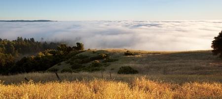 Blanket of fog covers golden hillside
