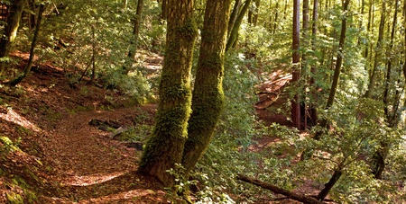 Hiking Path through temperate forest photo