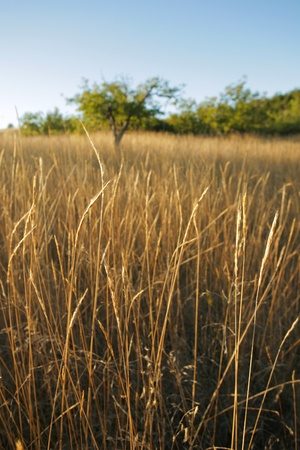 chaparral: Stunning chaparral grassland in Northern California in late afternoon light
