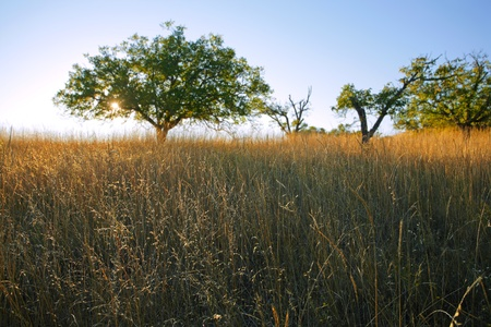 Savanna-like grassland in Northern California in late afternoon light photo