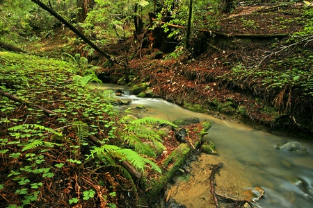 Lush rain forest stream with ferns and clovers photo