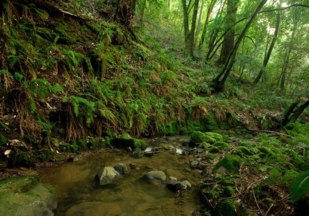 A remote prehistoric rain forest with large ferns, located in California photo