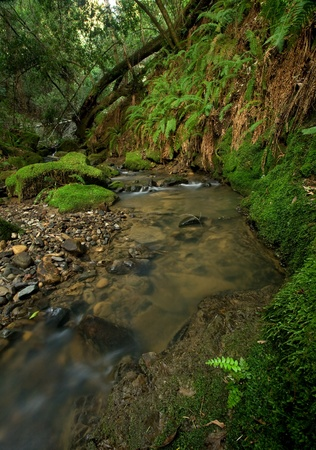 A remote prehistoric rain forest with large ferns, located in California