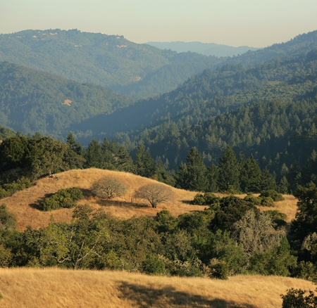 chaparral: Central California scenic view of Santa Cruz Mountains from Monte Bello Open Space