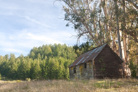 Old Abandoned Cabin in Sunny Field 写真素材